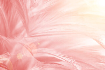 Wall Mural - Beautiful soft pink color trends feather pattern texture background with orange light