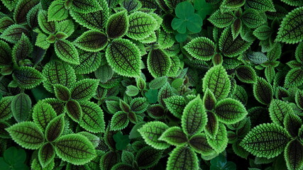 close up of green plant