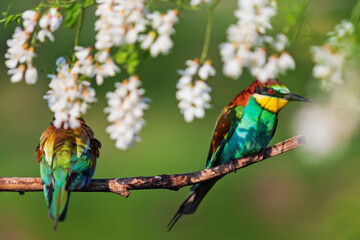 beautiful wild birds in the shade of white flowers