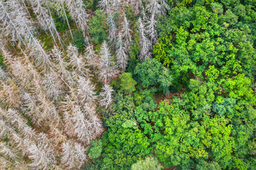 a dead and a healthy forest from above
