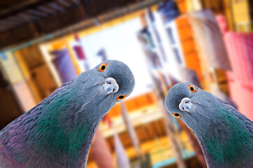 pigeons look down at the camera against the backdrop of city streets