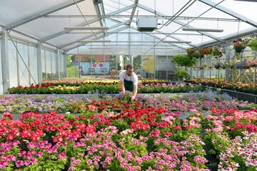 Gärtner in Gewächshaus mit Blumen bei der Arbeit // happy worker growing flowers in a greenhouse of a flower shop