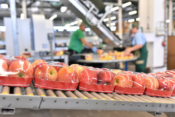 Nahrungsindustrie - Anlage zur Verpackung von Äpfeln für den Handel - Fliessband Closeup // food factory: assembly line with apples and workers