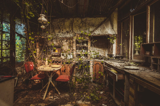 vieille cuisine avec de la végétation