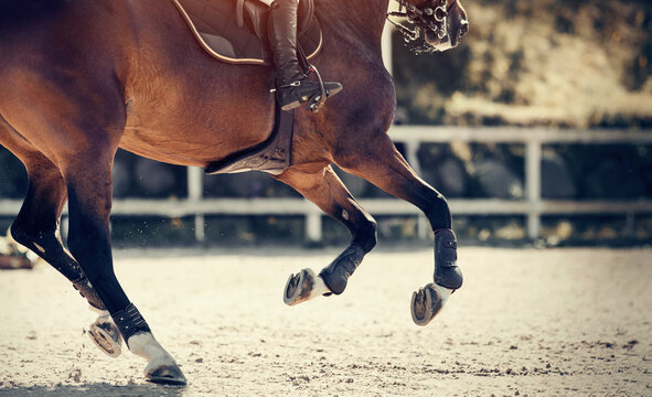 Equestrian sport. Legs of a galloping horse close-up.