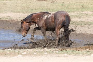Wild Horse at a Utah Desert Waterhole