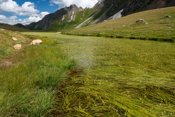 Panoramic view of a lake among alpine pastures.