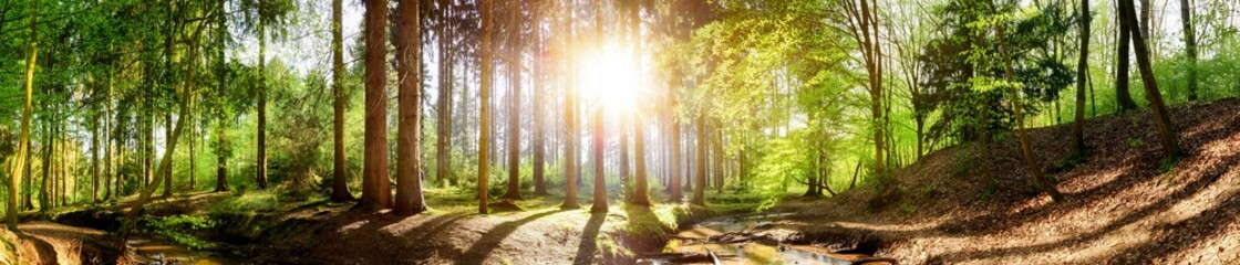 Forest panorama with a stream and a bright sun shining through the trees
