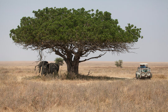 Elephants standing in shade of tree