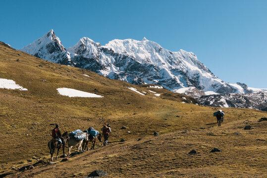 Horses on path, Ausangate, Willkanuta mountain range, Andes, Peru