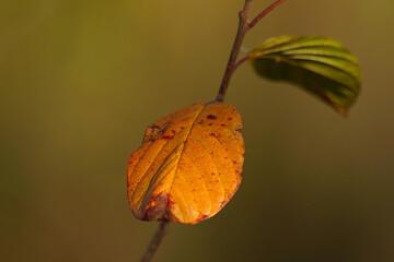 Obraz jesienny liść - fototapety do salonu