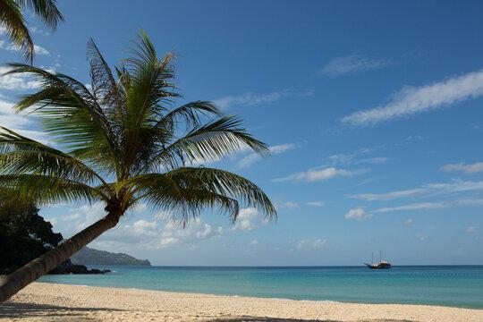 Palm tree and blue sky at Surin Beach, Phuket, Thailand