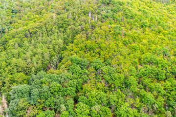 a sunny mixed forest from above