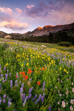 View of wild flowers during sunset