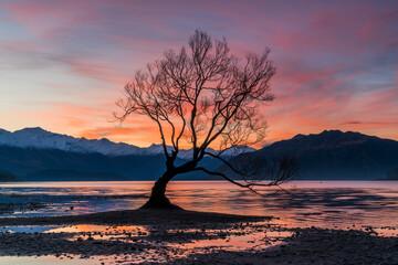 Lone tree in Wanaka, New Zealand