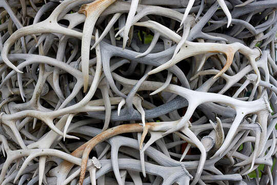 Close up of twisted antlers