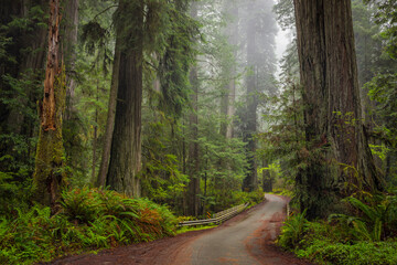 Scenic view of road passing through forest