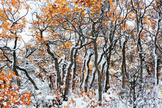 Scenic view of snow covered trees in White River National Forest
