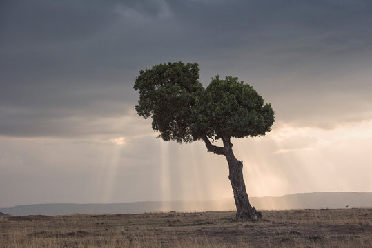Scenic view of sunbeam passing through clouds falling behind tree