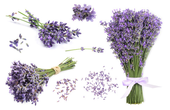 Set of lavender flowers on white background