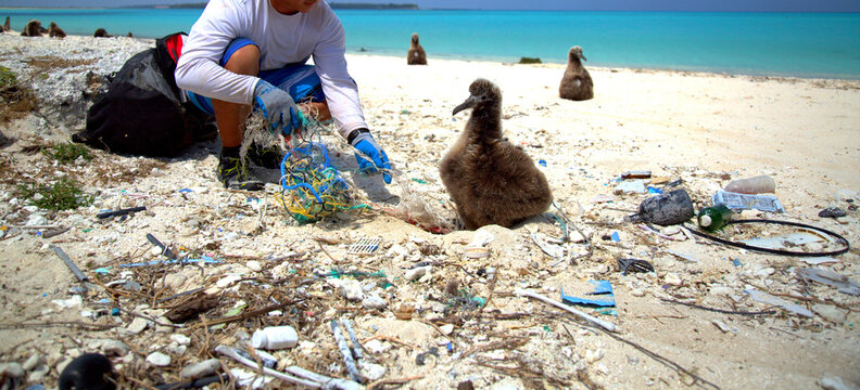 A member of the NOAA Marine Debris team helps disentangle a Laysan albatross chick in Papahānaumokuākea Marine National Monument.