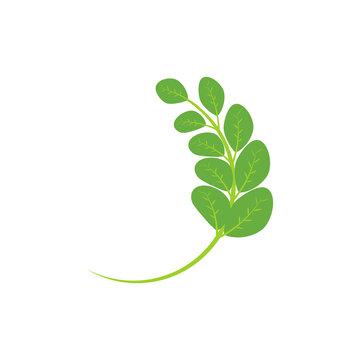 Moringa leaf Logo Template vector