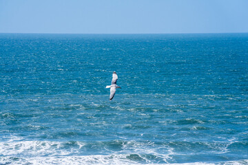 Photo sur Aluminium Dauphins Seagull flying over the vast expanse of the sea.Motion blur