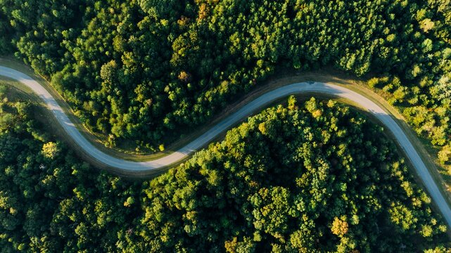Aerial photo of empty meandering road in between forest.