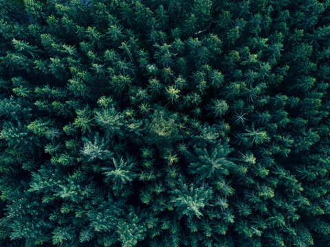 Aerial Overhead View of Tree tops in super rich dark green color shot in Germany