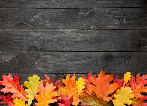 autumn leaves on black scorched background with empty space for text.