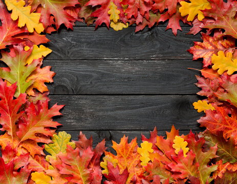 Beautiful frame with autumn leaves on black scorched background.