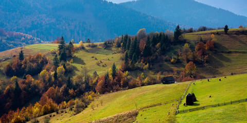 mountainous countryside landscape in autumn. beautiful scenery with forested rolling hills in fall colours. carpathian rural landscape. sunny day with clouds on the sky