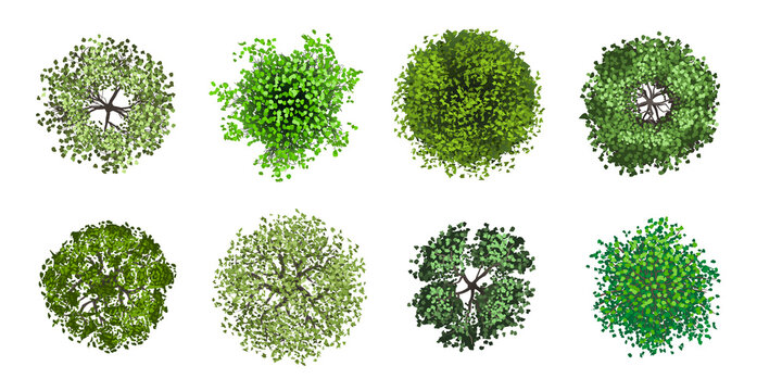 Set of realistic trees. Top view. Different plants and trees vector set for architectural or landscape design. (View from above) Nature green spaces.