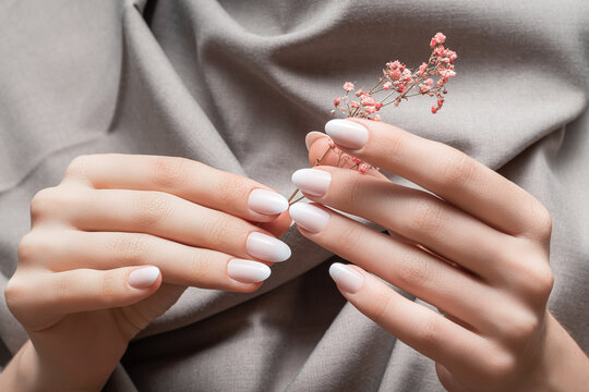 Female hands with white nail design. Female hands holding pink autumn flower. Woman hands on beige fabrick background
