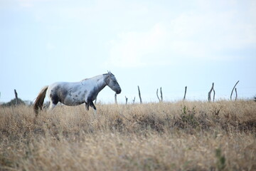 Wall Murals Culture white horse in the field