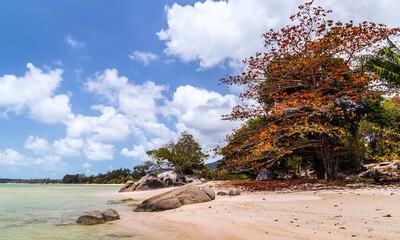 Scenic rocky adriatic beach