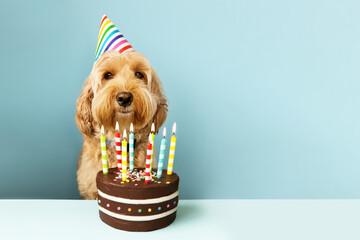 Funny dog with birthday cake