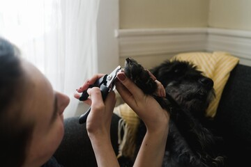 black labradoodle getting her nails clipped at home