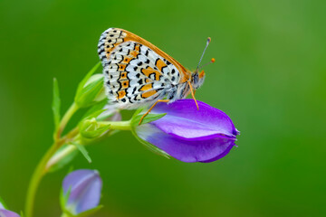 Printed roller blinds Butterfly Macro shots, Beautiful nature scene. Closeup beautiful butterfly sitting on the flower in a summer garden.