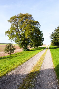 Country track lined with grass and trees with a blue sky.