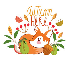hello autumn, sleeping fox acorn flowers leaves foliage banner