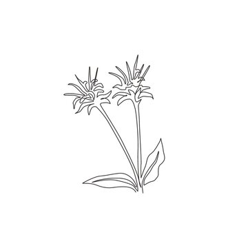 One continuous line drawing beauty fresh bergamot monarda for home decor wall art poster print. Decorative bee balm flower concept for greeting card. Trendy single line draw design vector illustration