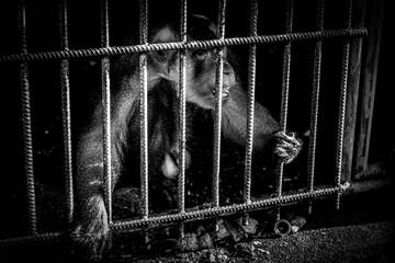 The curious monkey cub, Nakhon Si Thammarat, Thailand.