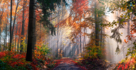 Magical autumn scenery in a dreamy forest, with rays of sunlight beautifully illuminating the wafts...