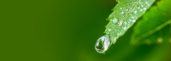 Big water drop Water on green leaf. Beautiful leaf with drops of water. Environment Concept. Photo...