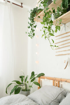 Best indoor plants to purify the air in the bedroom, detail and blured background, shelf with interior plants for better sleeping, pothos, ivy, alocasia polly, marantha