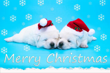 christmas cute puppy on isolated background