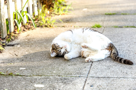A small Tabby cat lounging on the sidewalk, Seattle Washington.