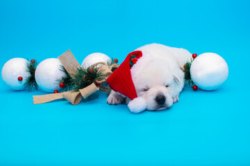 little christmas puppy on isolated background