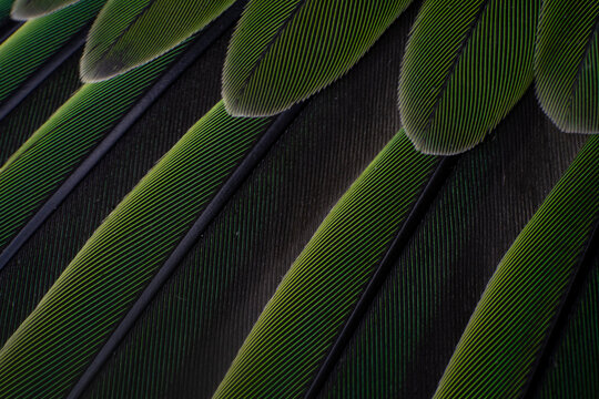 Macro details of a parrot colorful parrot feathers